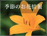 季節のお花情報